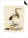 Antique Heron I Prints