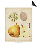 Harvest Pears II Posters by Heinrich Pfeiffer