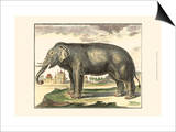 Diderot Elephant Prints by Denis Diderot