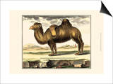 Diderot Camel Print by Denis Diderot
