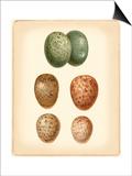 Bird Egg Study V Poster von  Vision Studio
