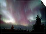 Aurora Borealis, Northern Lights, Alaska Range Mountains, Alaska, USA, North America Prints by Tom Walker