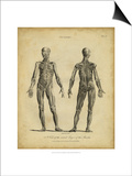 Anatomy Study III Posters by Jack Wilkes