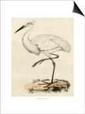 Antique Heron III Prints