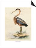 Antique Heron II Poster