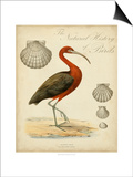 Heron Anthology II Posters