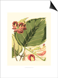 Fantastical Botanical I Posters by  Vision Studio