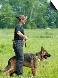 K9 Police Officer Training a German Shepherd as a Cadaver or Corpse Dog Posters by Louise Murray