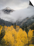 Aspens in their Autumn Finery Deep in the Uncompahgre River Gorge Near Ouray Posters by Don Grall