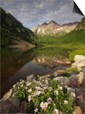 A Spring Bouquet of Aspen Daisies Decorates the Maroon Lake Shoreline Posters by Don Grall