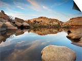 Oasis in Joshua Tree National Park, California, USA Prints by Patrick Smith