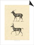 Vintage Deer II Poster by  Vision Studio