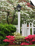 Azaleas and Flowering Dogwood Tree Along White Picket Fence Prints by Adam Jones