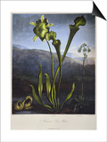 Thornton: Bog Plants Posters by Thomas Sutherland