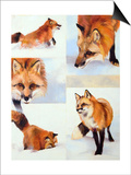 Vulpes V Posters by Julie Chapman