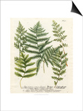 Fern Gathering II Prints by Johann Wilhelm Weinmann