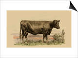 Antique Cow II Poster by Julian Bien