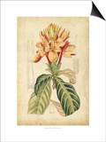 Curtis Tropical Blooms IV Prints by Samuel Curtis