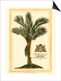 British Colonial Palm IV Prints