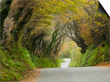 A Narrow Country Lane Near Camelford, in Cornwall, United Kingdom Prints by Ashley Cooper