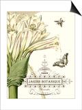 Jardin Botanique II Print by  Vision Studio