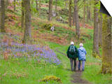 An Elderly Couple Walking Through a Bluebell Wood on the Shores of Coniston Water, United Kingdom Poster by Ashley Cooper