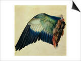 Wing of a Blue Roller, 1512 Prints by Albrecht Dürer