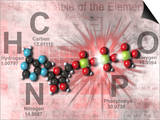 Adenosine Triphosphate Molecular Model Showing High Energy Bonds with a Periodic Table of Elements Posters by Carol & Mike Werner
