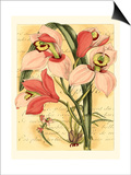 French Orchid Prints by Samuel Curtis