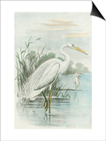 White Heron Prints