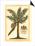 British Colonial Palm II Art