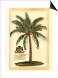 British Colonial Palm III Posters