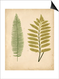 Cottage Ferns II Prints by Edward Lowe