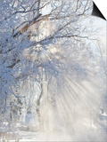 Sunbeams Through Branches Covered with Hoar Frost Poster by Neal Mischler