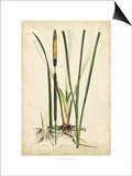 Antique Cattail II Poster by Samuel Curtis