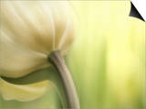 Tulip Poster by Irene Suchocki