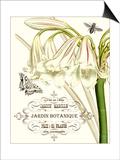 Jardin Botanique I Prints by  Vision Studio