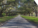 Driveway Beneath Stately Live Oak Trees Draped in Spanish Moss, Boone Hall Plantation Print by Adam Jones