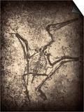 Pterodactylus Kochi Print by Clive Nolan