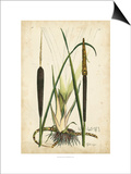 Antique Cattail I Posters by Samuel Curtis