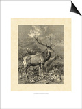 Vintage Roe Deer II Prints by Specht Friedrich