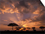 Crepuscular Sun Rays and Acacia Trees at Twilight, Masai Mara Game Reserve, Kenya, Africa Prints by Gerald & Buff Corsi