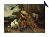 Revolt in the Poultry Coup Prints by Melchior de Hondecoeter