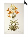 Lilium Penduliflorum, from Les Liliacees, 1811 Posters by Pierre-Joseph Redouté
