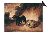Two Jaguars from Peru Prints by Antoine-Louis Barye