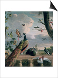 Palace of Amsterdam with Exotic Birds Posters by Melchior de Hondecoeter