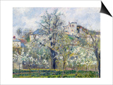 The Vegetable Garden with Trees in Blossom, Spring, Pontoise, 1877 Poster par Camille Pissarro