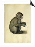 A Monkey Art by Albrecht Dürer