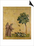 St. Francis of Assisi Preaching to the Birds Poster by  Giotto di Bondone