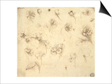 Study of Flowers Prints by  Leonardo da Vinci